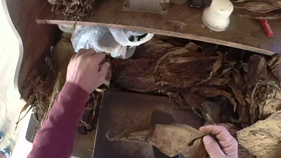 Ever Wonder How a Cuban Cigar is Rolled?